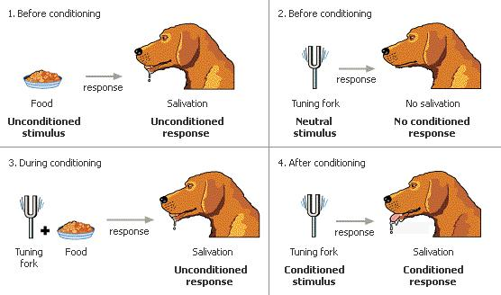 Classical conditioning (JPG)