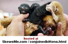 http://www.skewsme.com/img/conjoinedkittens2_b.jpg