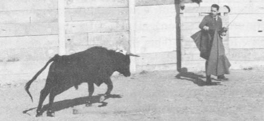 José Delgado with bull (1 of 2)