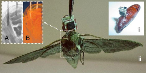 Insect implant Mems