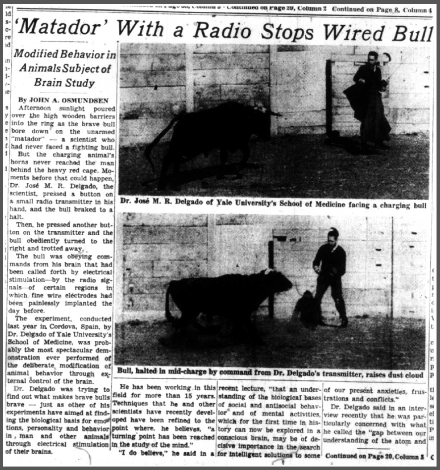 John A. Osmundsen, 'Matador' With a Radio Stops Wired Bull, The New York Times, 17 May 1965 (1 of 2)