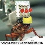 external image cockroach.jpg